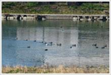 岩松川の写真